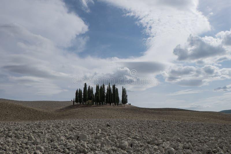 Zypresse-Waldung in Val-` d ` Orcia lizenzfreie stockfotos