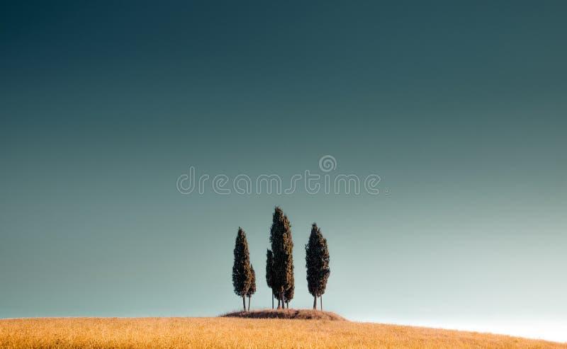 Zypressenbäume in der Toskana gegen den blauen Himmel stockbilder