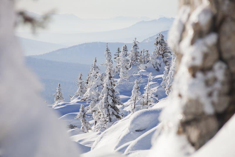 Zyuratkul, ландшафт зимы Городок елей и Satka далеко стоковое изображение