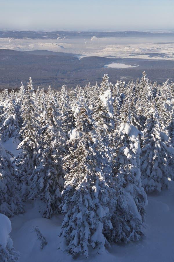 Zyuratkul, ландшафт зимы Городок елей и Satka далеко стоковое изображение rf