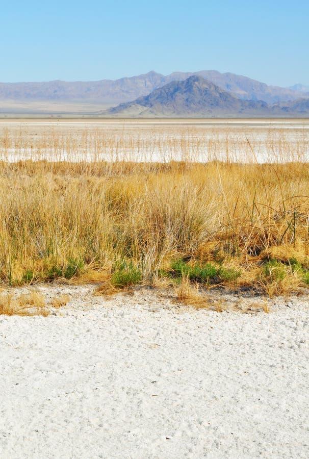 Zzyzx sodavatten sjö, Mojaveöken royaltyfria bilder