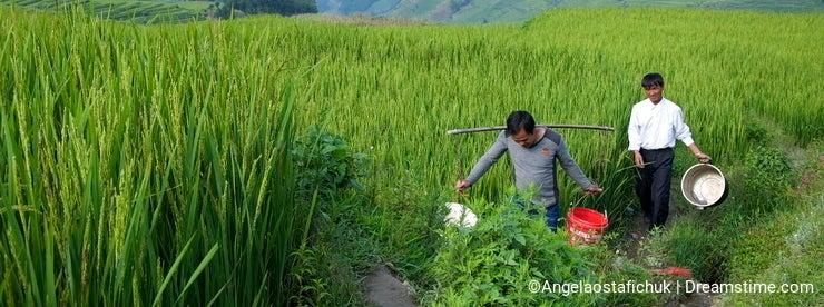 Yuanyang Rice Farmers