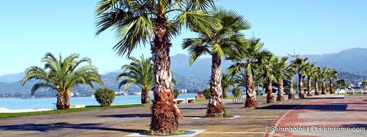 Batumi Park of Palms
