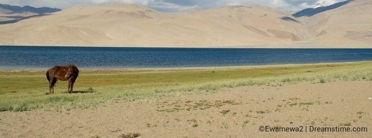 Horse against Tso Moriri lake