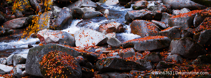 Stream in golden fall forest
