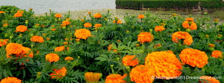Marigold flowers and Hindu temple at Bedugul Bali