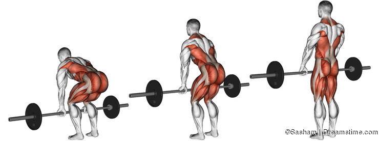 Exercising. Deadlifts with a barbell