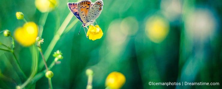 Beautiful Butterfly on a yellow field