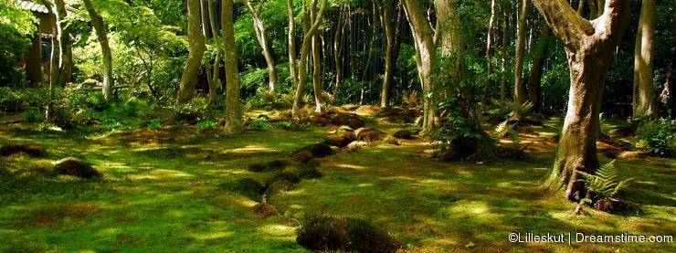Green moss forest