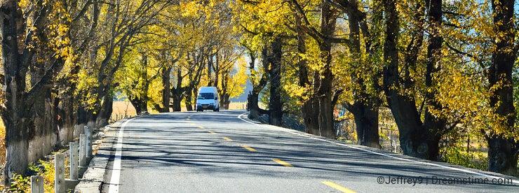 The autumn of Xinduqiao