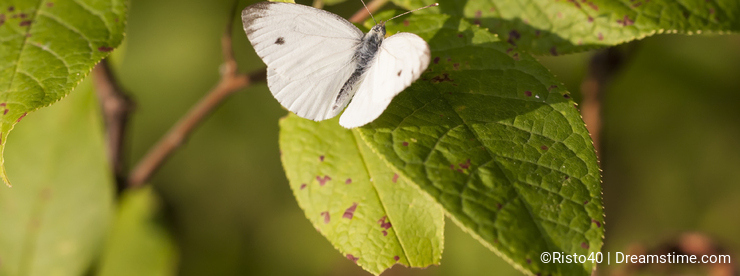 White butterfly on a green tree leaf
