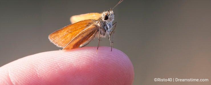 Little orange butterfly on a finger