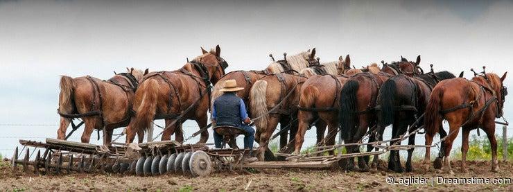 Farmer on a fileld 2.