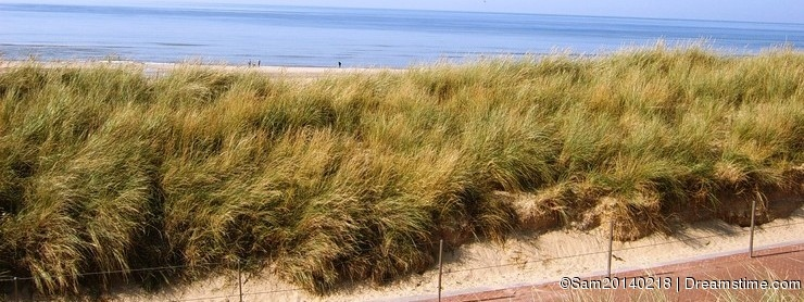 Path with fence and seagrass leading to the beach