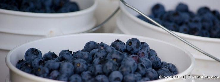 Buckets of blueberries