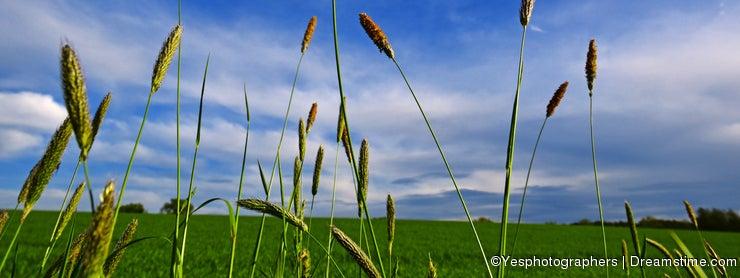 Grass threads under blue sky