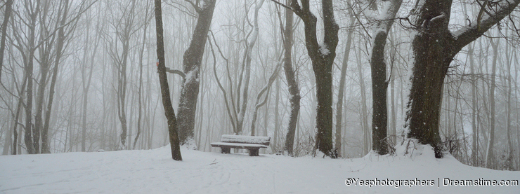 Snowy bench in the forest