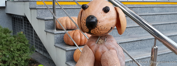 Funny toy dog made of pumpkins, harvest festival