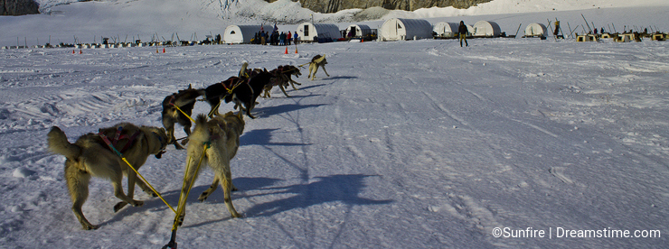 Dog sleding in the glacier