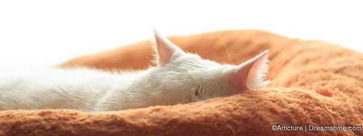 Sleepy White cat