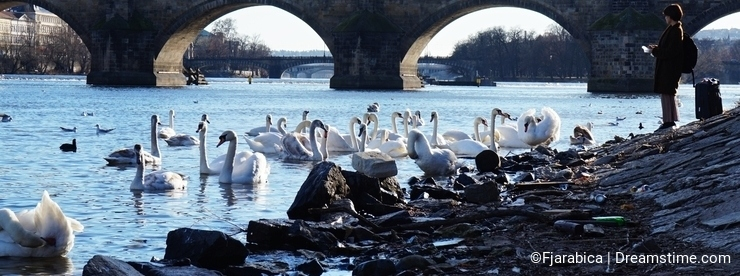 Feeding birds in the Czech Republic in Prague on the Vltava river.