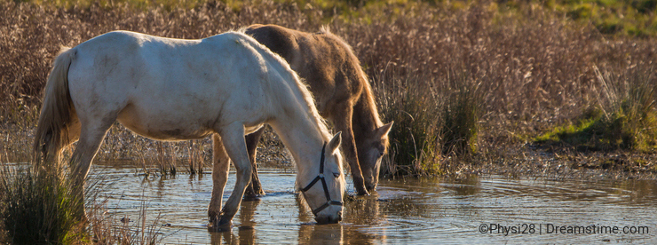 Horses at a lagoon