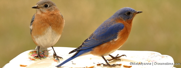 Bluebird Dinner For Two