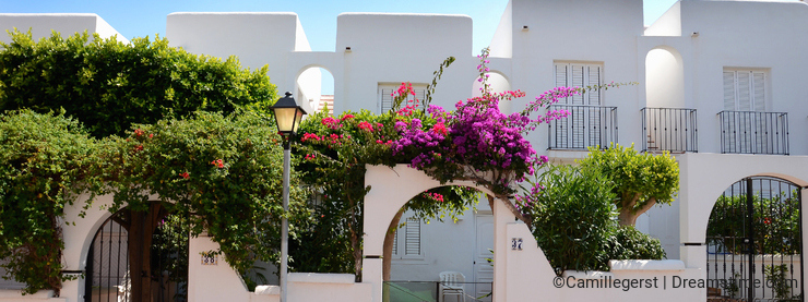 White houses with purple flowers