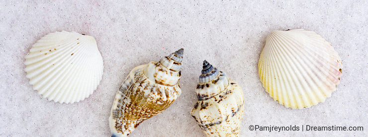 Group of Seashells