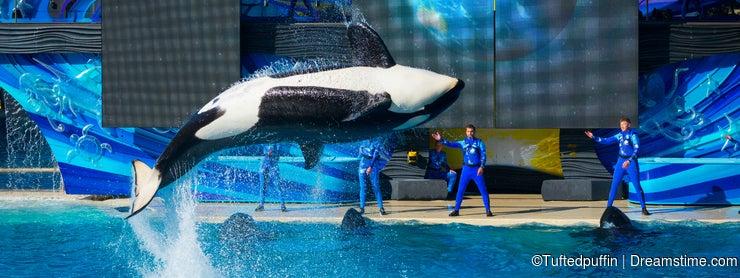 Orca Spin Bow - SeaWorld San Diego