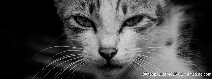 Curious cat black and white