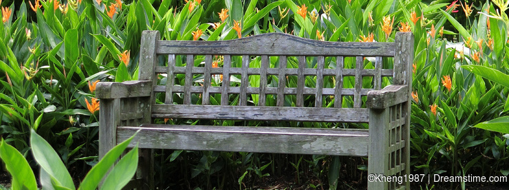 Wooden Bench among Heliconiaceae Hort