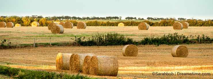 Cylindrical Hay Bales