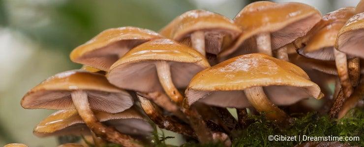 Mushroom of France