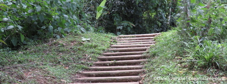 Ladder to the forest - Paraty