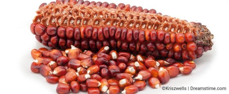Corn cob and seeds