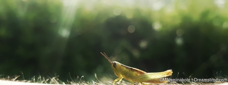 The grasshopper is resting on the human skin like the grass
