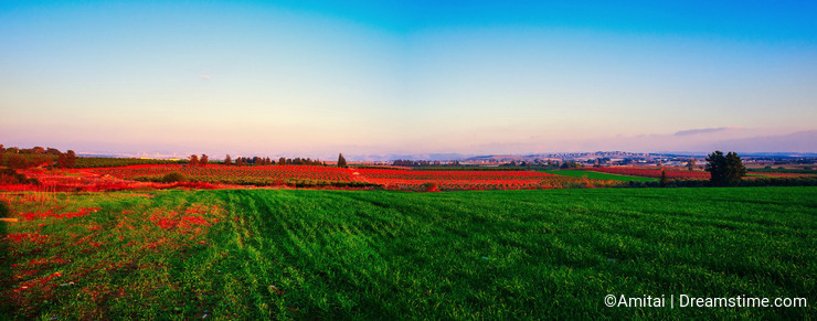 Holy Land Series-Central Israel Panorama