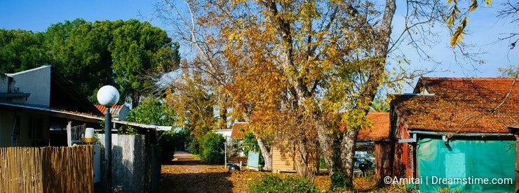 Holyland Series - Kibbutz fall colors