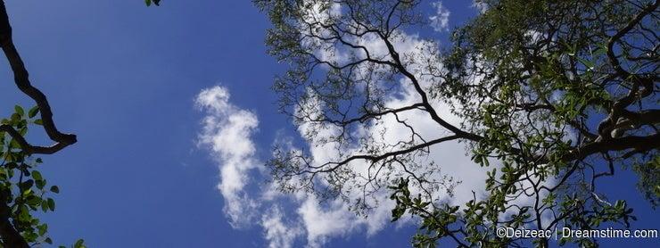 Árvores e nuvens