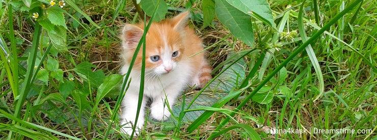 Little kitten hiding in green grass
