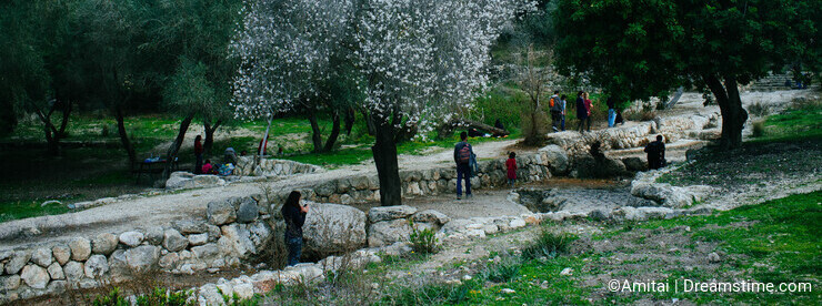 Holy land Series -Almond tree in Ayalon Park