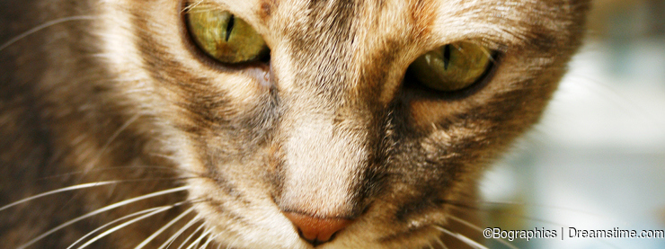 Tabby cat wistful look