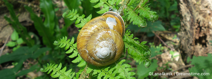 Snail in a shell on green fern leaf