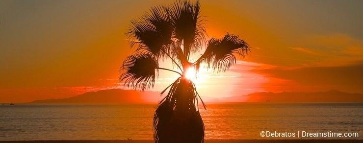 Palm tree sunset California