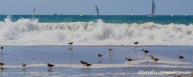 Waves birds sailboats