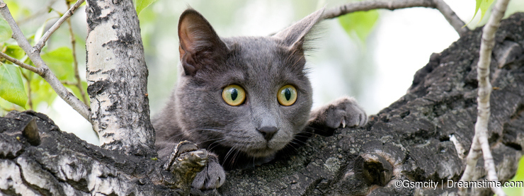 Curious cat on a tree