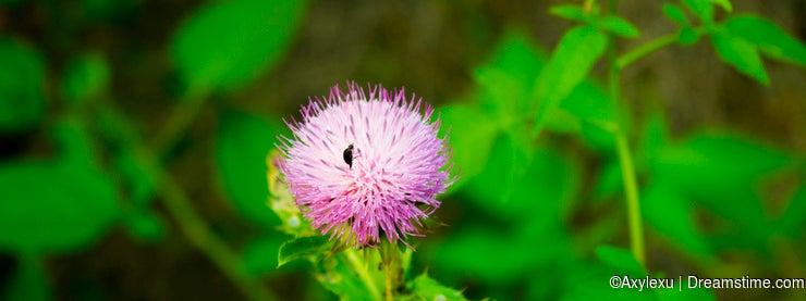 Close up wild flower