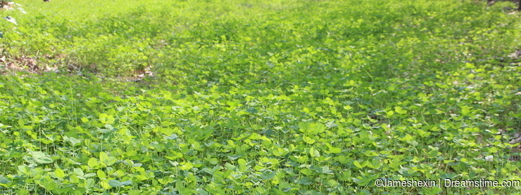 Plant , flower, The grassland , Sauce pressing grass , clover, happiness