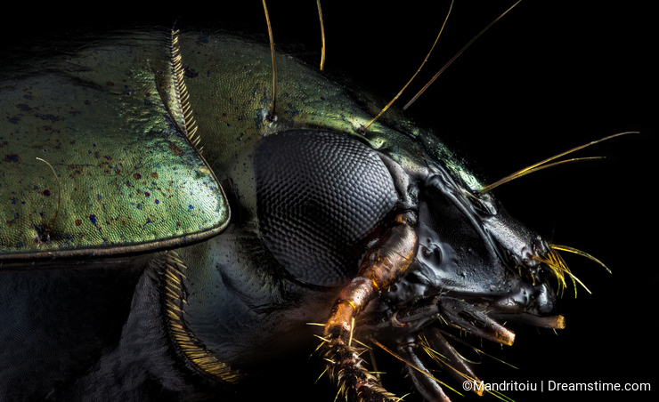 Profile portrait of a green beetle